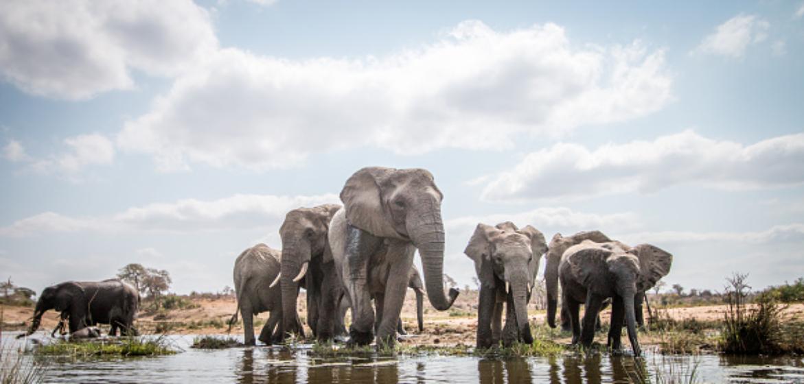15-daagse groepsrondreis Zuid-Afrika